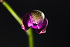 An Orchid Blooming : 1 gallery with 81 photos